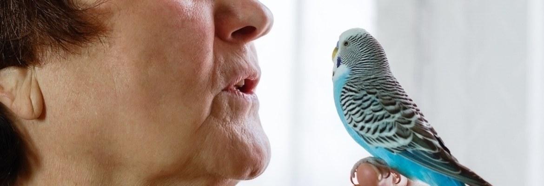 Kommunikation mit Papageien & SIttichen - Wellensittich und Frau