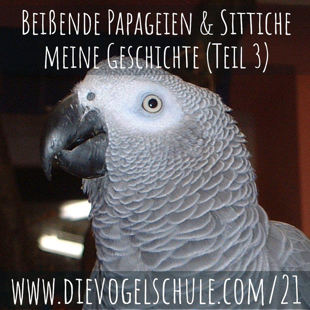 Beißende Papageien & Sittiche - Graupapagei Hector