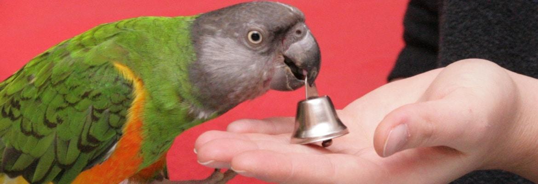 Clickertraining für Papageien & Sittiche WP
